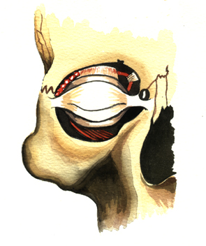 Eye Socket, Eye Lids, Boney Socket
